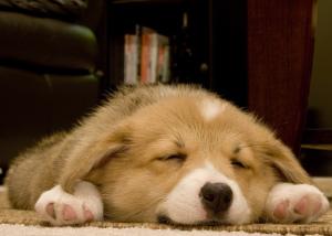 gaba for sleep