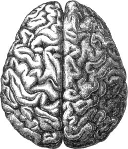 gaba's role in the brain